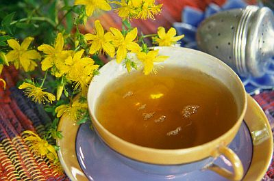 Cup of Tea and St John's Wort Plant