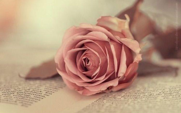 cropped-book-cool-cute-pink-favim-com-592914.jpg
